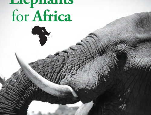 Help Elephants for Africa save our precious African Elephant